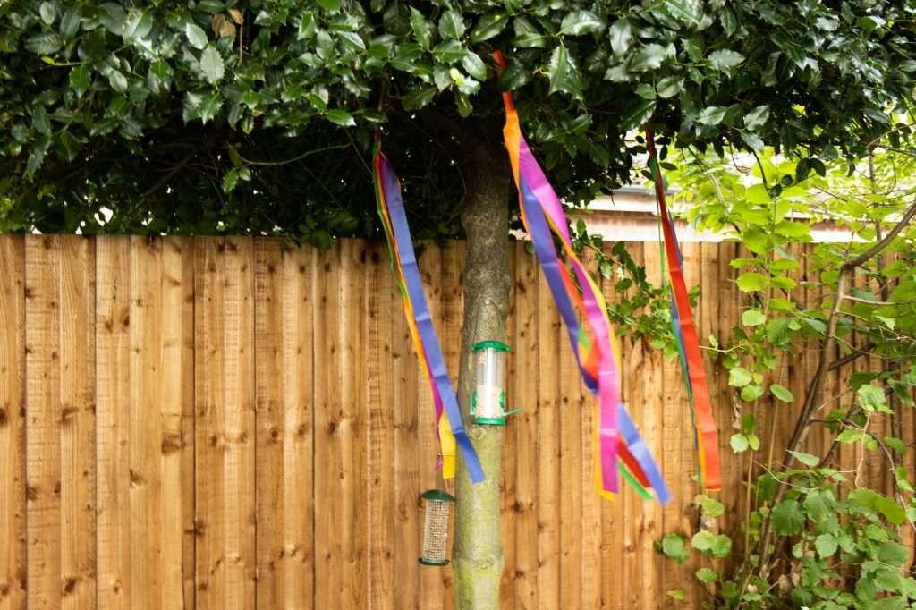 Tree with Bird Feeder